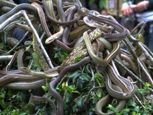 蛇岛(神龙岛)