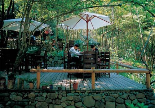 千岛湖--森林氧吧